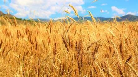 Nyugodtak a gabonapiacok az aláírás előtt
