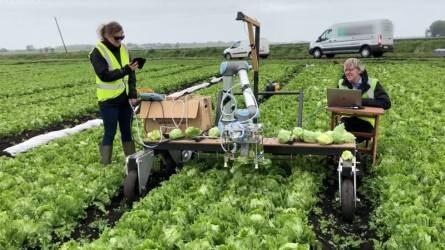 Vegabot: már a jégsalátát is robot takarítja be!
