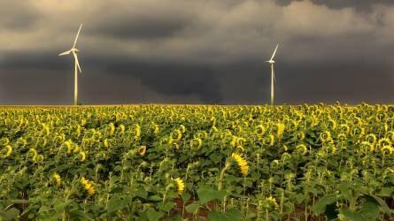 600 millió forinttal támogatják a mezőgazdasági termelőeszközökben okozott viharkárok kompenzálását
