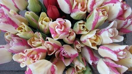 Növényi szervek felhasználása a virágkötészetben
