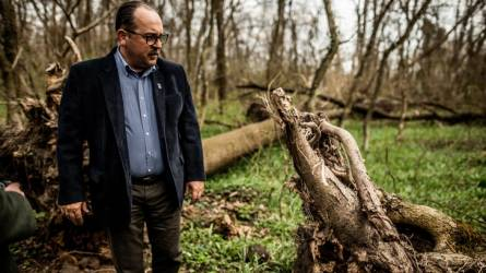 A kőrisvész miatt pusztul a lébényi erdő