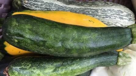 Mi okoz elváltozást a cukkini levelén és termésén?