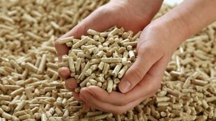 Pályázatok a biomassza-alapú gazdaság szereplői számára