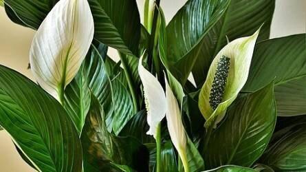 Szobanövények védelme növényápoló szerekkel