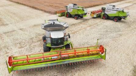 Három kombájn a repcetáblán - Így zajlott az aratás Chernelházadamonyán