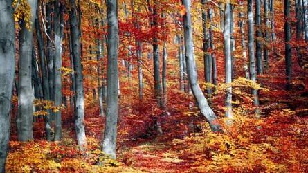 Izgalmas őszi programokat kínál az Ipoly Erdő Zrt.