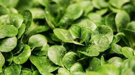 Összefoglaló a növényvédő szerek háztáji alkalmazásáról