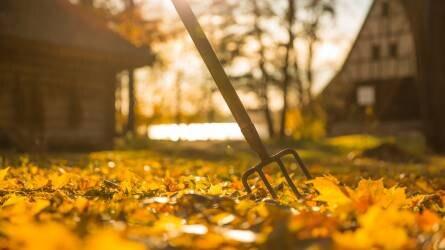 7+1 kora őszi feladat a kertben