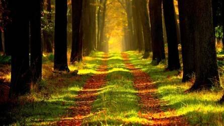 A 106 milliárd forintot is meghaladja az erdőgazdálkodásra jutó támogatási összeg