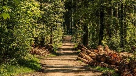 Erdőgazdálkodás, erdőhasznosítás hogyan adózunk utána?