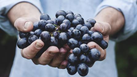 A mezőgazdasági idénymunka (EFO) igénybevételénekés elszámolásának szabályai