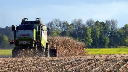 Terményárak: lanyha piac, a kukoricánál jelentős árcsökkenés valószínű.