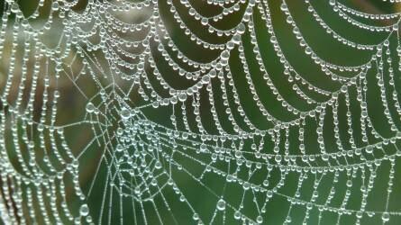 Pókok szerepe és jelentősége a biológiai növényvédelem területén, különös tekintettel a gyümölcsültetvényekre