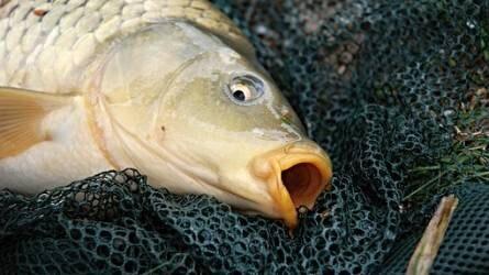 MA-HAL: egyszerűbb támogatási rendszerre van szükség a halászati ágazatban