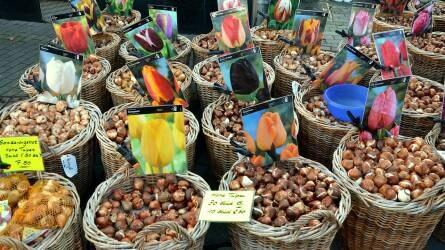 Hagymás dísznövények vásárlása és ültetése