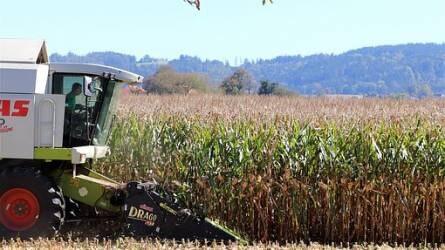 Az agrár-külkereskedelem egyenlege 20 százalékkal javult az év első felében