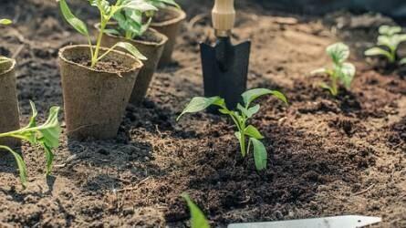 Zöldség-palántanevelés és buktatói (II.)