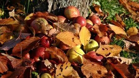 Milyen műtrágyát érdemes kijuttatni ősszel a gyümölcsfákra?