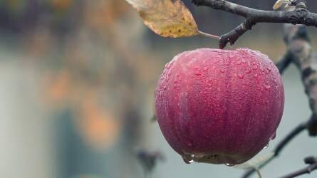 Agrár-és élelmiszeripari innovációk finanszírozása uniós pályázati forrásokból