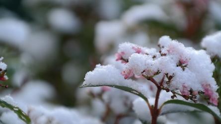 Teleltetésre fel! II. rész – a citrusfélék, a leander, a sétányrózsa, a kefevirág és az angyaltrombita megfelelő téli védelme
