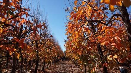 Miért fontos az őszi lemosó permetezés?