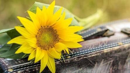Új növényegészségügyi rendszer és új nyilvántartási kötelezettségek