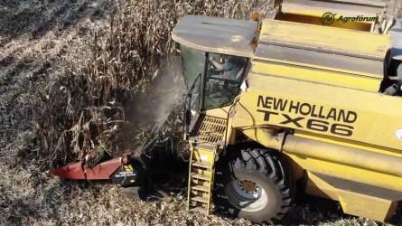 Lesz-e jövője a magyar kukoricatermesztésnek? - Befejeződött a kukorica betakarítása Lengyeltótiban
