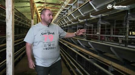 Ketreces vagy mélyalmos tojás? - Ilyen a feljavított ketreces tojástermelés a Kereki-Farmnál