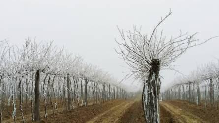 Gazdainfó: tovább terjed a madárinfluenza; januári határidők és Agromash